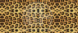 Animal-Print-SB-13.602